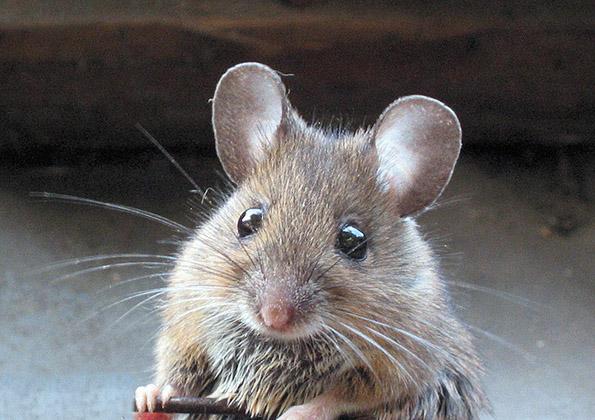 Глушец влегол во банкомат и изџвакал вистинско богатство