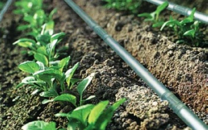 """Земјоделците може да аплицираат за """"Набавка на систем за наводнување капка по капка, конструкција на бунари и други зафати на површинска вода"""""""