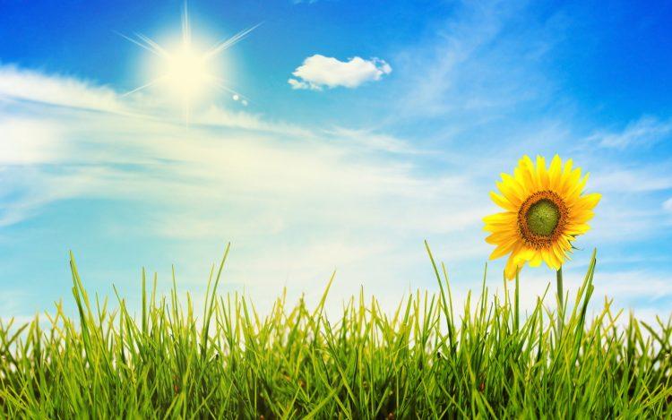 Сончево и топло, температура до 36 степени