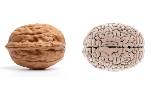 Изгледот на плодот покажува кој орган го лечи