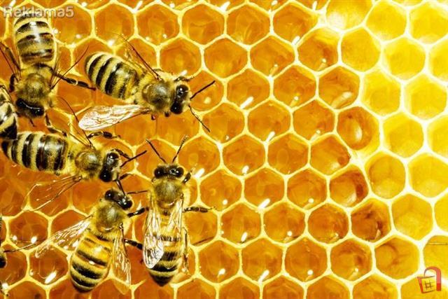 Пчелите го сфаќаат она што децата не можат