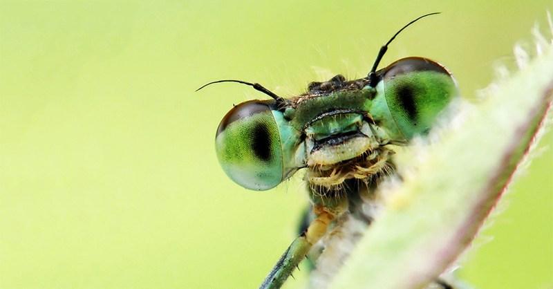 Што ќе му се случи на светот ако ги снема инсектите?
