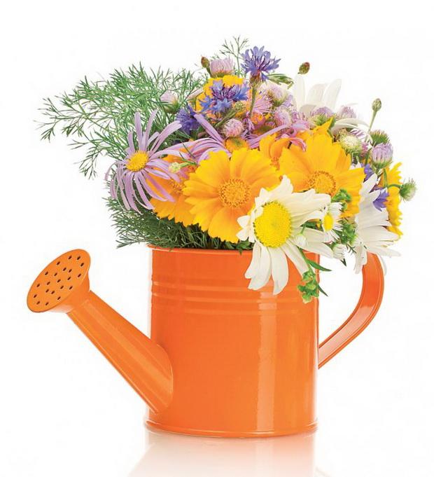 Оживејте ја просторијата и внесете цвеќе во својот дом
