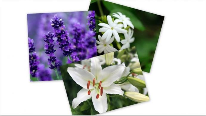 Не чувајте растенија во спалните соби