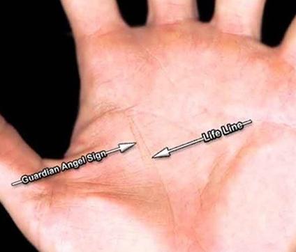 Линии на дланките
