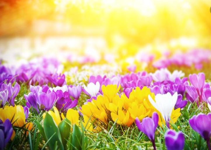 Пролетни температури – проверете до кога