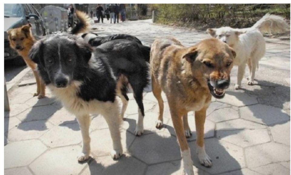 Ако ве нападне улично куче отштетата е од 60.000 до 180.000 денари