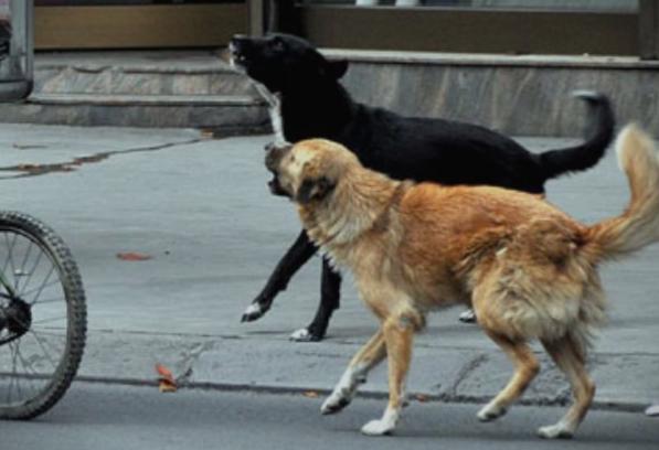 Седум лица каснати од кучиња скитници за еден ден: Тетанус нема, граѓаните оставени сами да се снаоѓаат