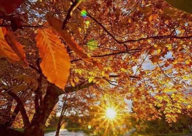 Денеска сончево и топло- особено ќе се изненадите од времето кое следува во наредните денови