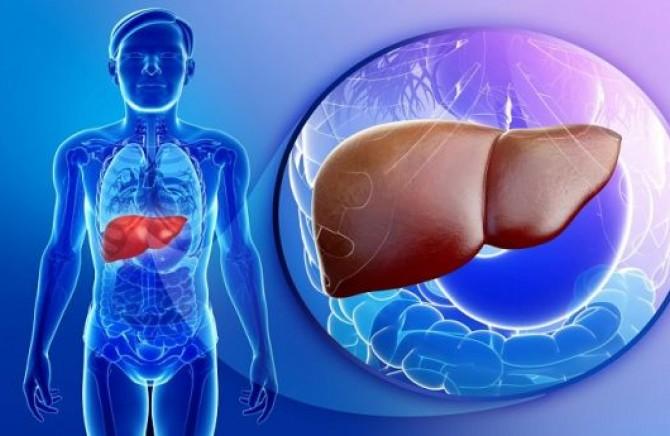 Човечкиот црн дроб е создаден за да преживее 600 години, а човекот го уништува за само 60 години: Еве како!